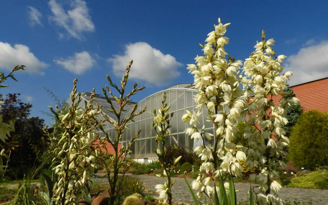Prázdniny v botanické zahradě