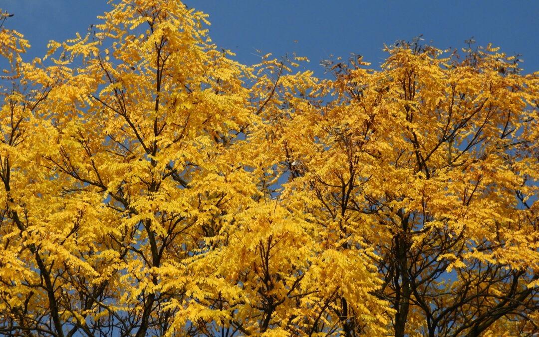 Zářivé barvy v botanické